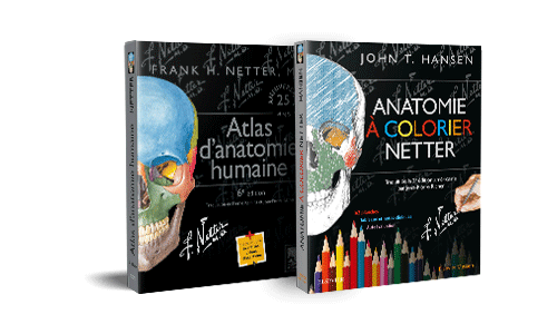 Bundle anatomie